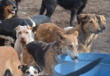 albergue-canino