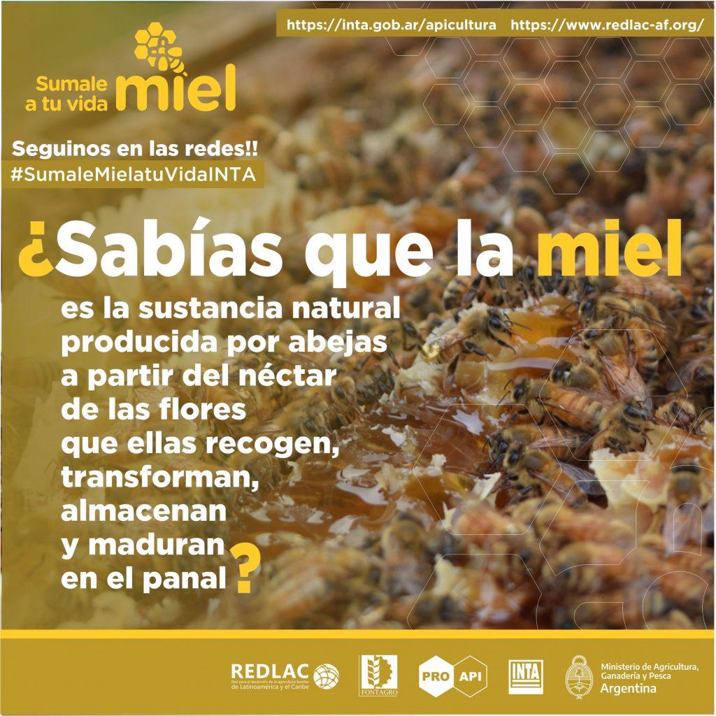 """Semana de la Miel 2020: """"Tal cual lo produce la abeja, llega a tu mesa"""", destaca Palacio, del INTA, en exclusivo con ABC"""